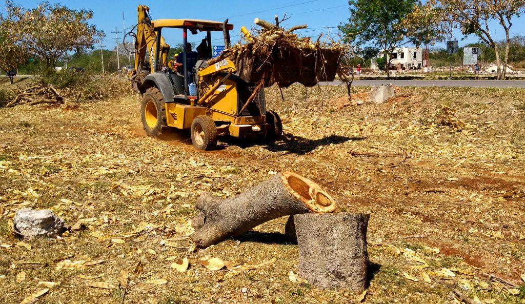 Maquinaria recoge restos de árboles