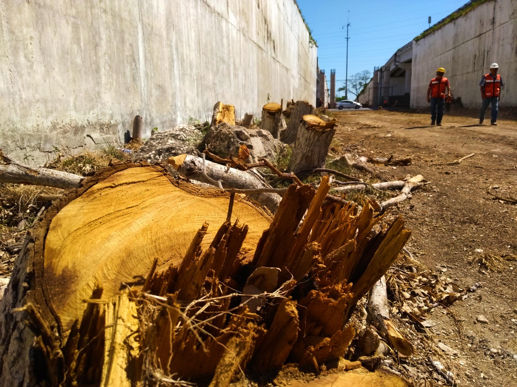Lo que callamos las autoridades: nadie responde por arboricidio en puente a Progreso (video)