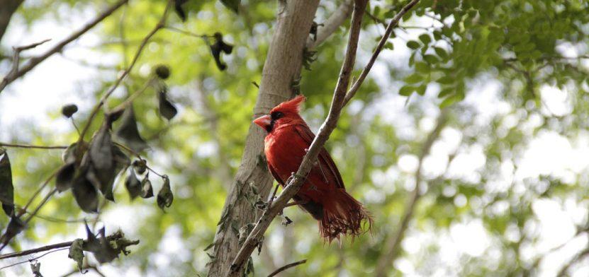Reserva Puuc, santuario y sede de Festival de Aves Yucatán