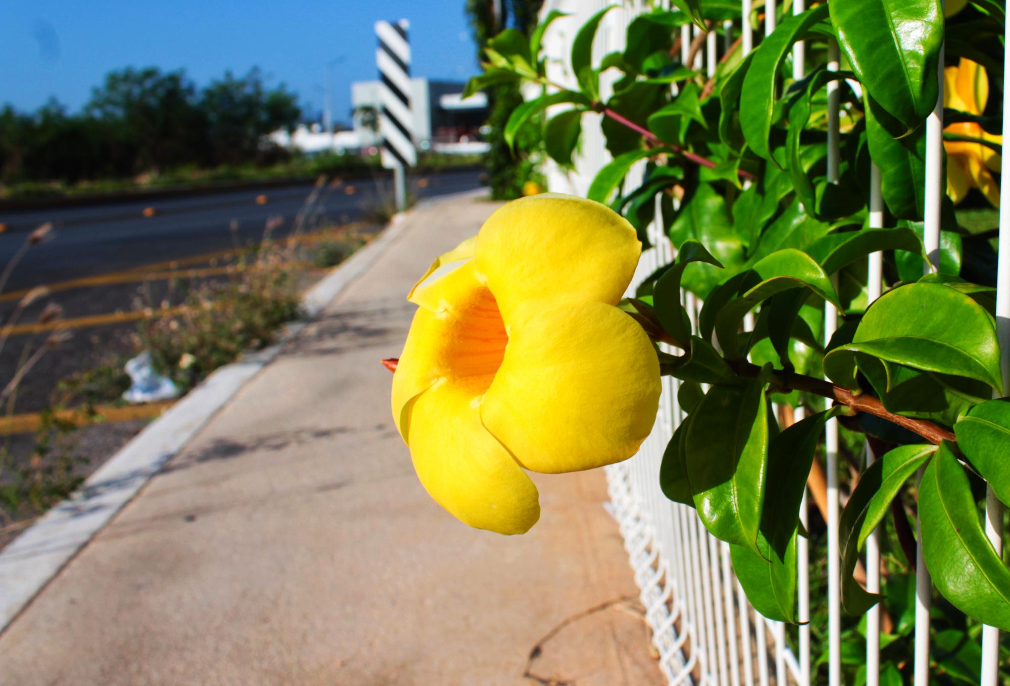 Este martes 20 de marzo llega la primavera… y calor de más de 40° a Yucatán