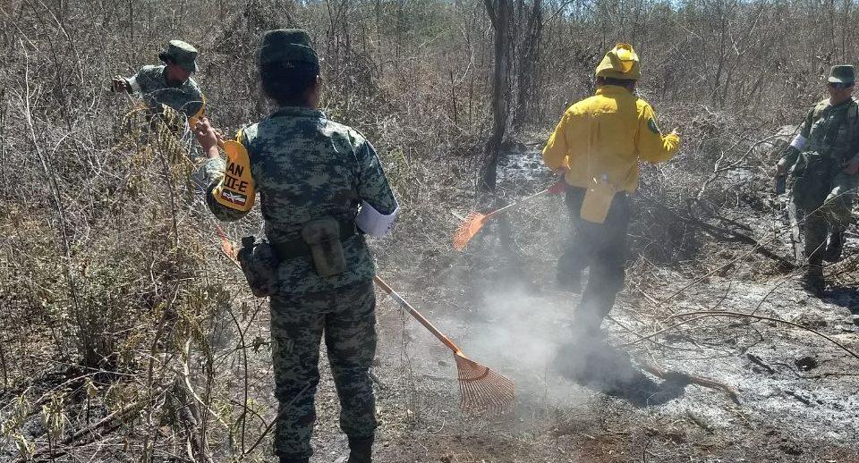 Vigilan incendios y suspenderán en abril quemas agrícolas