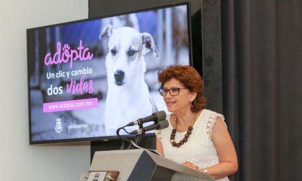 Nuevo sitio web promueve en Mérida adopción de perros y gatos