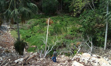 Rancho afecta cenote en Yucatán y es sancionado