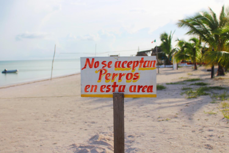 'Popo' de perro en la playa puede causarte una escandalosa infección