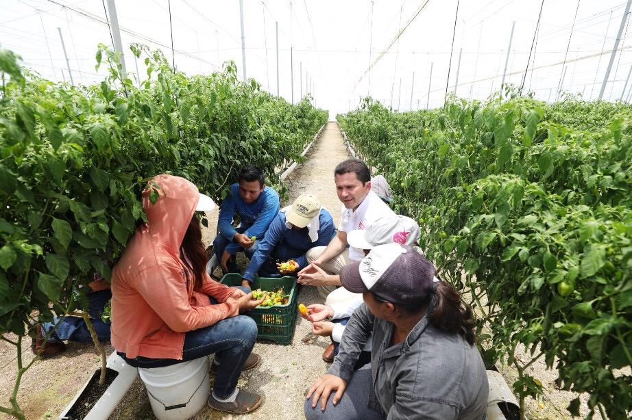 Hacer producir el campo yucateco y convertirlo en una potencia: Sahuí