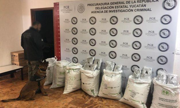 Interceptan en Mérida marihuana de Guadalajara hacia Quintana Roo