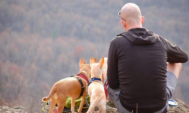 Descubren rara enfermedad transmitida de perros a humanos en Estados Unidos