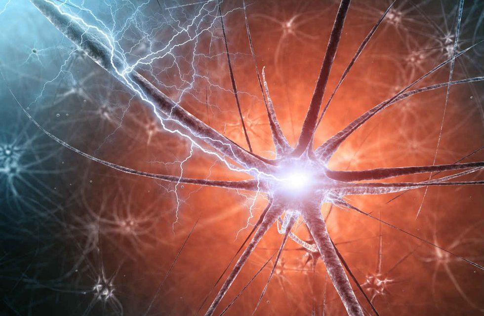 Científicos transfieren recuerdos entre seres vivos