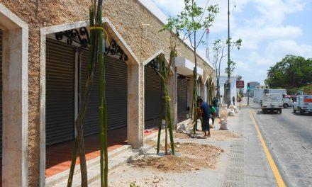 Copian modelo de Cdmx para sembrar árboles en banquetas de Mérida (video)