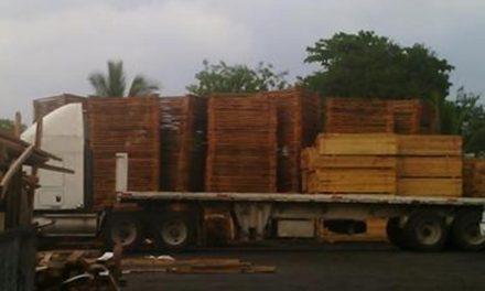 Taladores ilegales encuentran mercado en Yucatán
