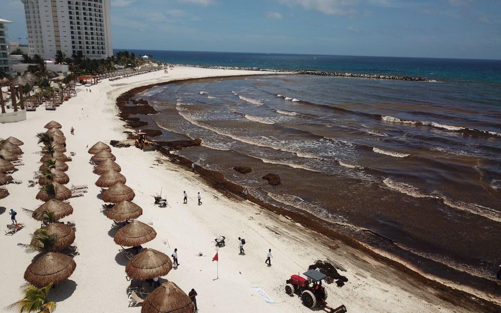 Playas del Caribe Mexicano invadidas de nuevo por sargazo (vídeo)