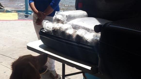 ¿Turista o 'mulita'? Decomisan marihuana en Playa del Carmen