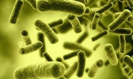 Bacterias intestinales tienen que ver con el tamaño de la cintura
