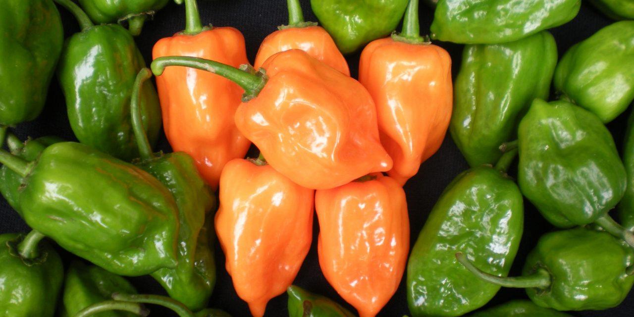 Nuevo método para proteger cultivos de papaya, chile y jatropha