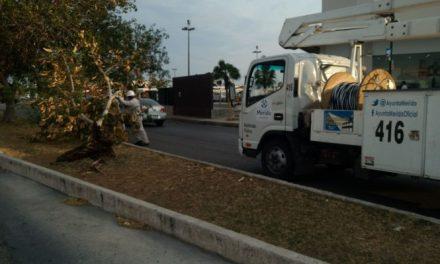 Ayuntamiento de Mérida respetará ordenamientos legales de cara al proceso electoral