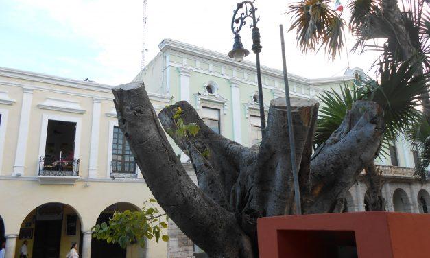 Parques de Mérida, reprobados en arbolado: Ayuntamiento (video)