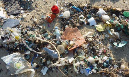 Preocupante contaminación de nuestros mares por PET.- Semarnat