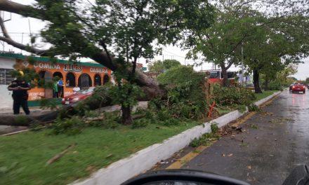 Vientos de hasta 90 kilómetros por hora golpearon a Mérida