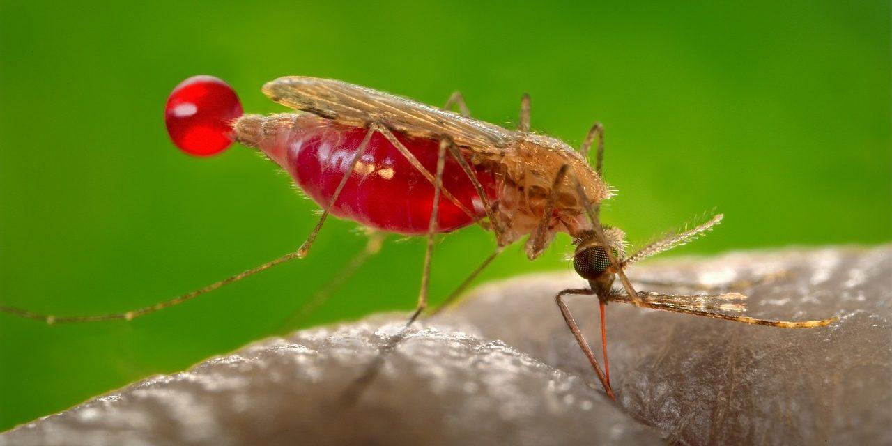 Combate a mosco larvario del dengue, zika y chikungunya