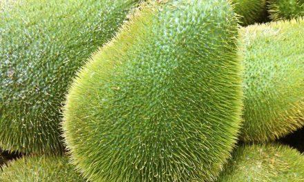 Científicos mexicanos de la UNAM crean super chayote contra el cáncer