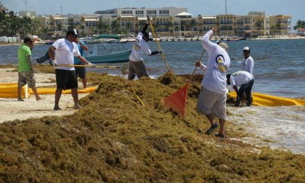 Falla 'cerco antisargazo' en Riviera Maya