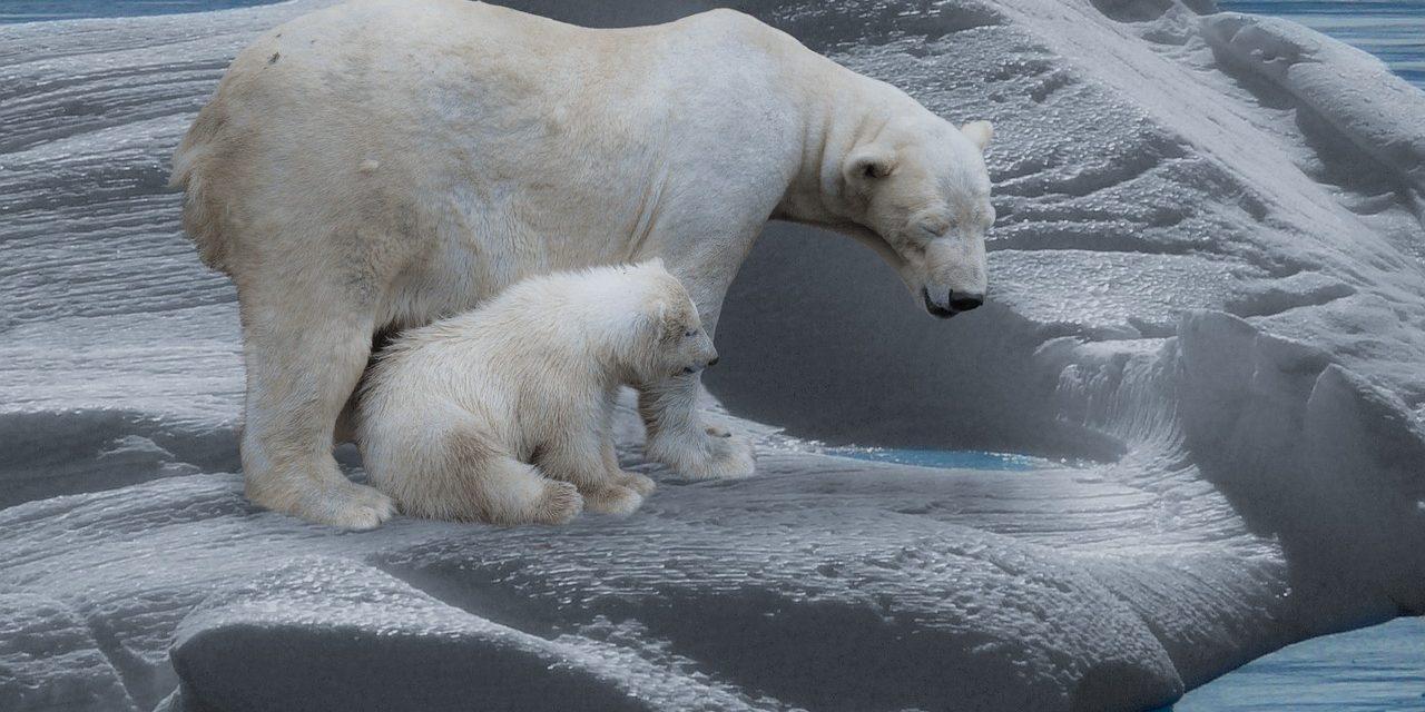 El efecto dominó que puede empujar a la Tierra a un efecto de invernadero irreversible