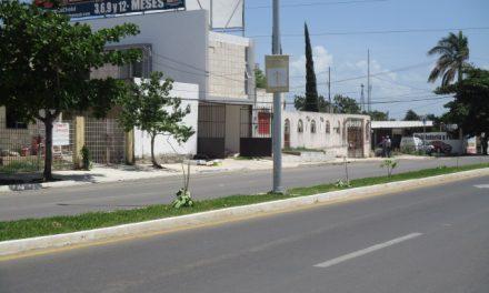 Ayuntamiento de Mérida interpondrá denuncia por daños a 71 árboles Maculís en  Cholul