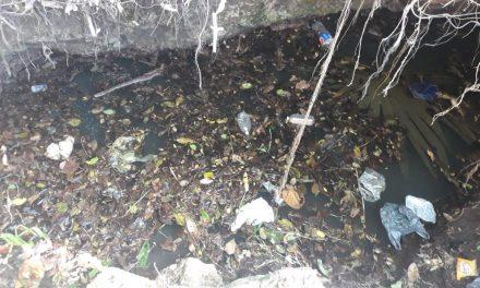 Rescatarán cuatro cenotes afectados por basura y contaminación