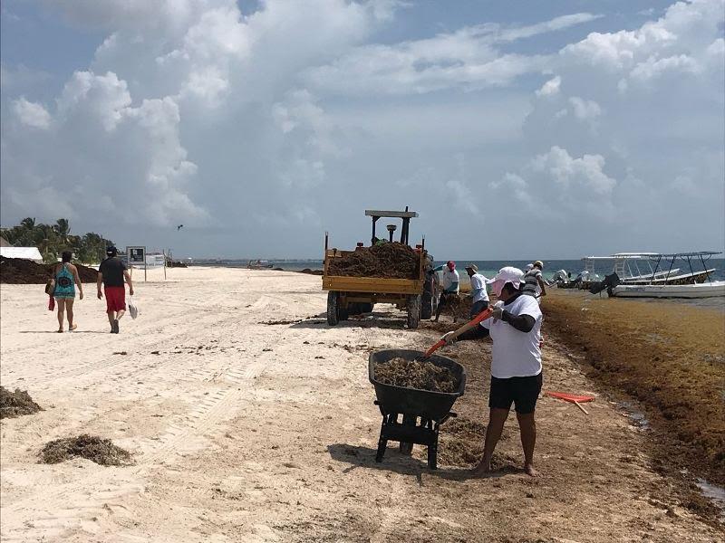 Retoma Caribe Mexicano proyecto para capturar sargazo en el mar