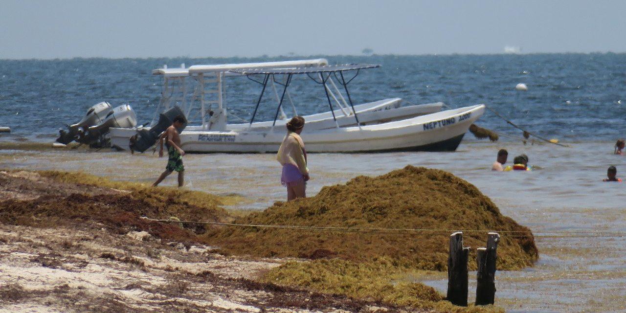 Preparan 'muro ecológico' contra sargazo en Caribe Mexicano