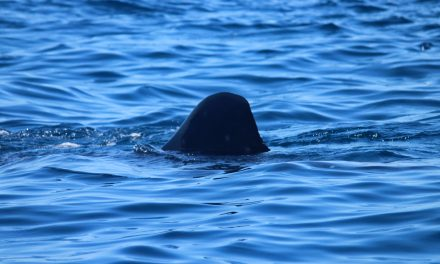 Sí, nadar con el tiburón ballena es inolvidable, pero nadie te advierte de esto… (videos)