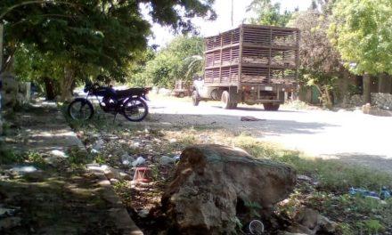 'Alerta' de grupos y activistas por megagranja en Homún