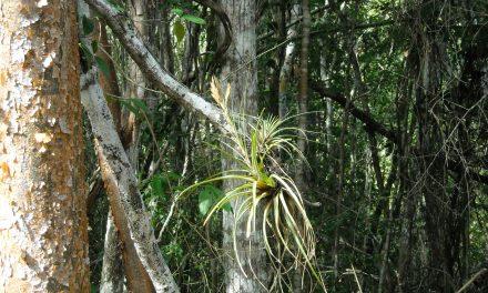 Descubren planta capaz de reaccionar a efectos de cambio climático