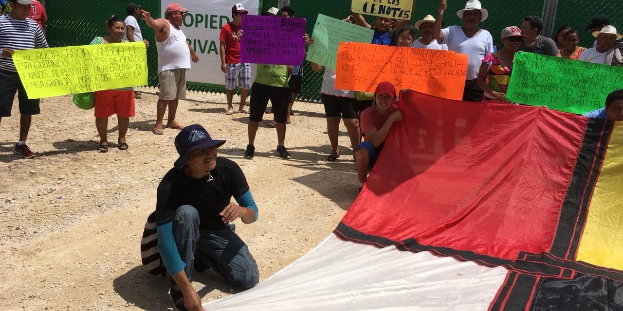 Nadie quiere frenar la megagranja porcícola en Homún: activistas (video)