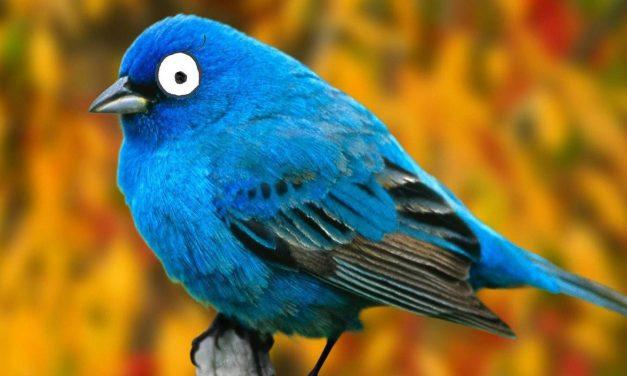 CEO de Twitter quiere que usuarios cuestionen su red social
