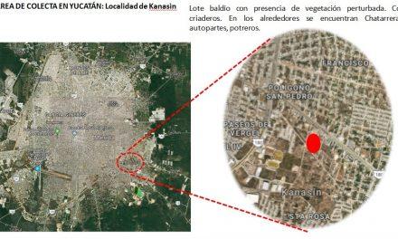 """Mosquitos """"Aedes albopictus"""" rondan Mérida"""