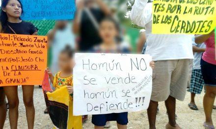 Homún: Ordena juez a megagranja porcícola suspender operaciones para proteger Infancia