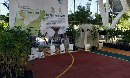 Antiguo alimento maya entra a fase de producción industrial
