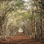 Depredación y mancha urbana 'acosan' Reserva de Cuxtal Mérida