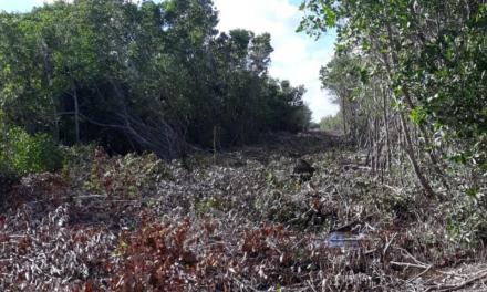 Autoridades de San Felipe implicadas en daños en Ría Lagartos