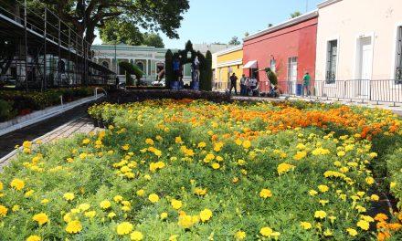 'Camino de Flores' en su cuarta edición, este fin de semana