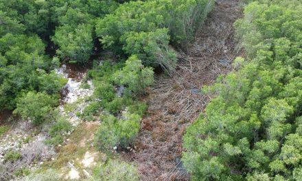 Cárcel y multa de más de 1 mdp por daño al manglar de Ría Lagartos