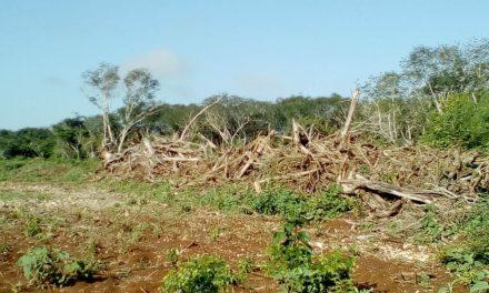 """Plan de reforestación federal, """"con tierra fértil"""" en Yucatán"""