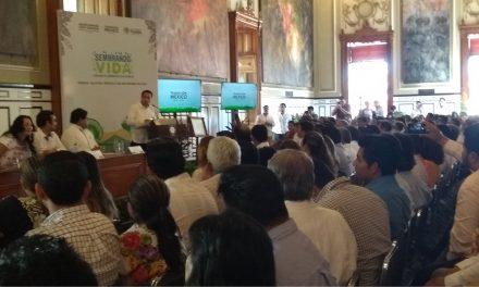 A reforestación de 25 mil hectáreas en Yucatán