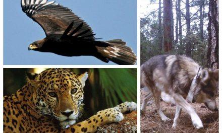 Las 10 historias de éxito en la conservación de especies prioritarias