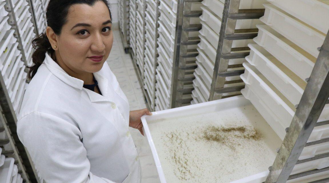 La misión del Laboratorio para Control Biológico de mosquito Aedes Aegypti