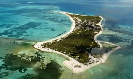 Península de Yucatán y Mar Caribe pierden recursos marinos
