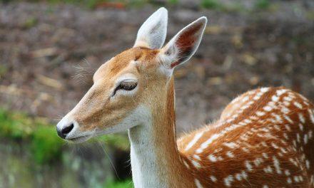 Cazador de venados es condenado a ver Bambi por un año en la cárcel