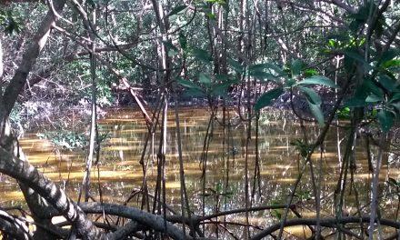 Calentamiento global y sus efectos en costa poniente de Yucatán