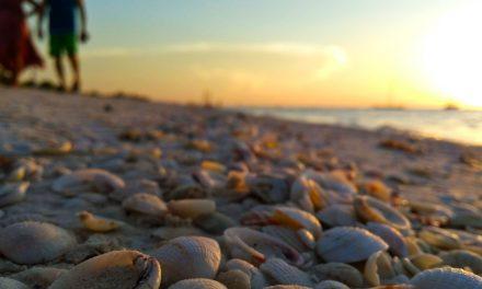 ¿Vacaciones en las playas de Yucatán? ¡Aguas! Mira cuáles tienen más bacterias